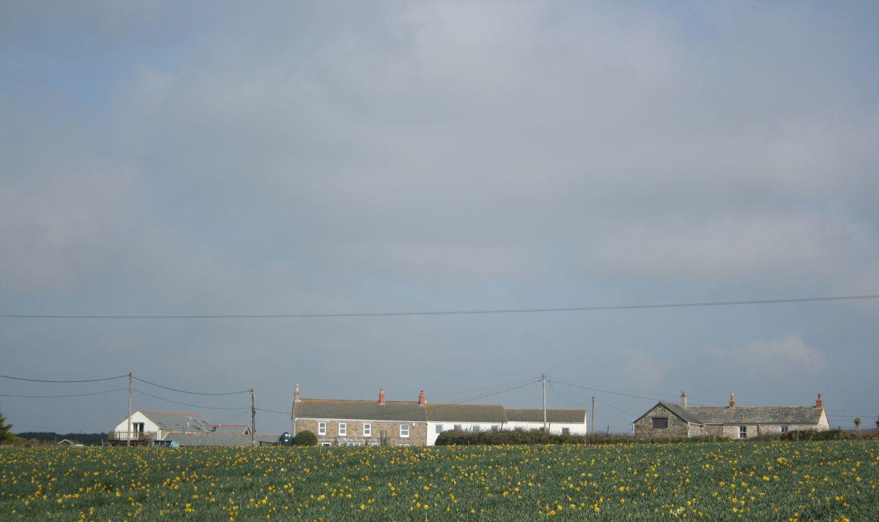 Tregiffian, with daffodils.