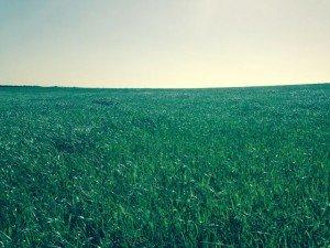 Trevescan field. Green.