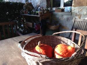 Gourds - La Bristellerie