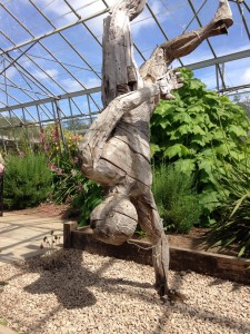 Acrobat, in the glasshouse.