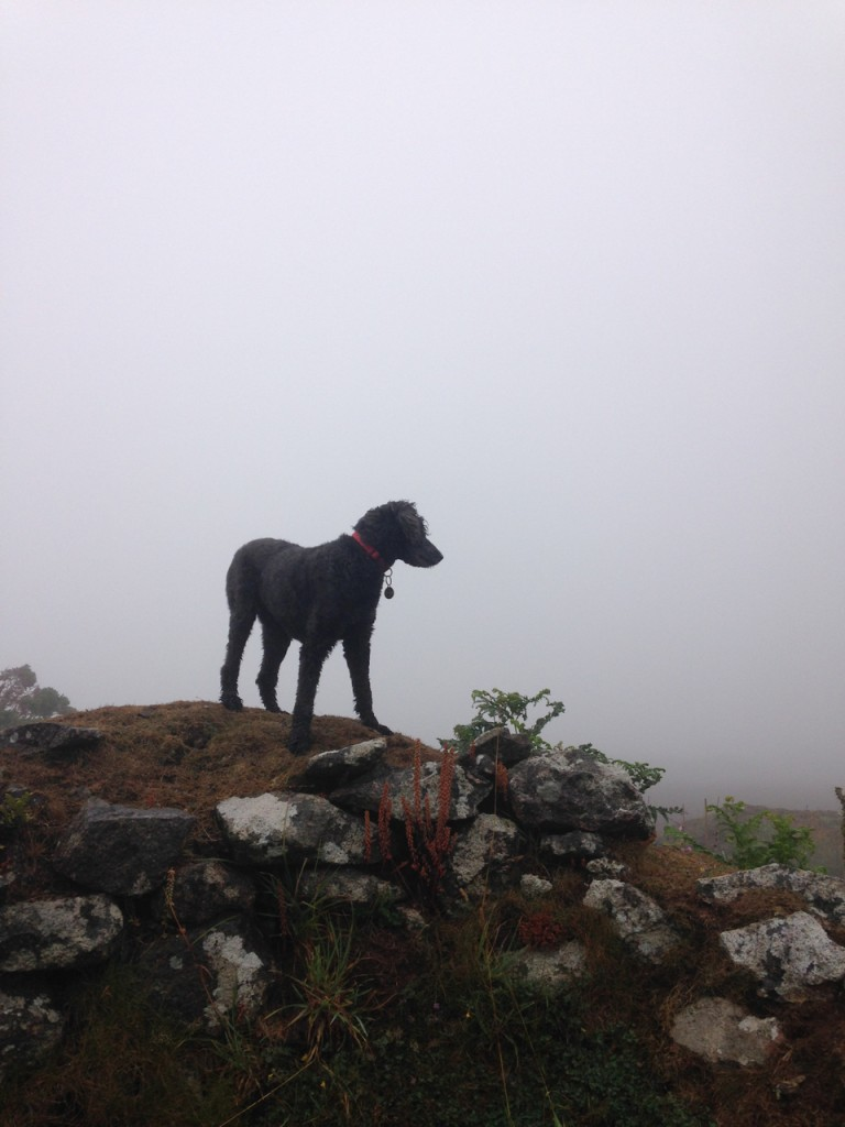 Polly at pretty much the same spot, wondering who's stolen Ross Poldark's mines.