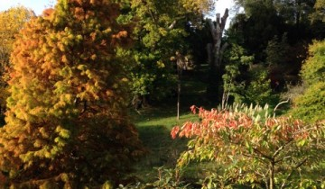Autumn colours at Glendurgan.