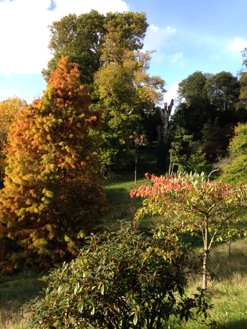 Autumn colours at Glendurgan.