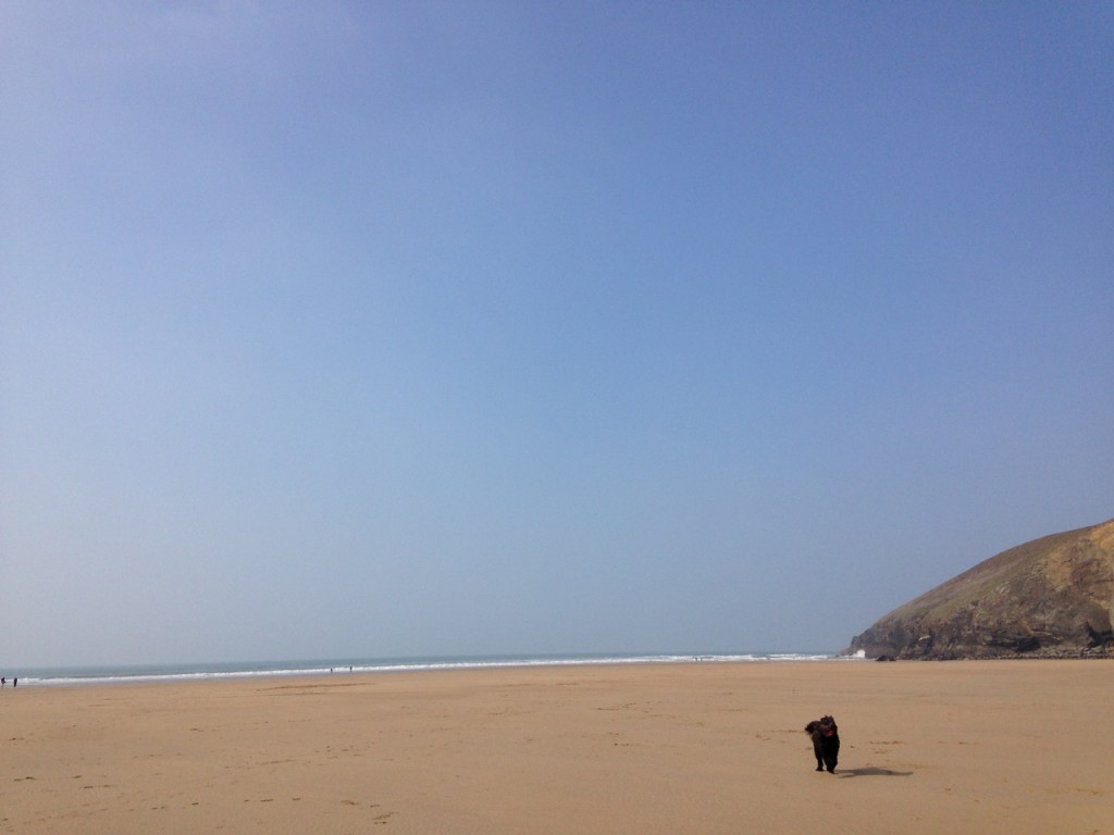 Mawgan Porth with dog