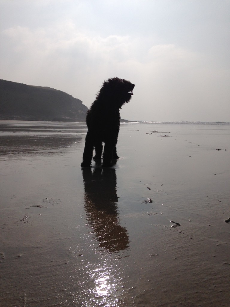 Polly on Mawgan Porth