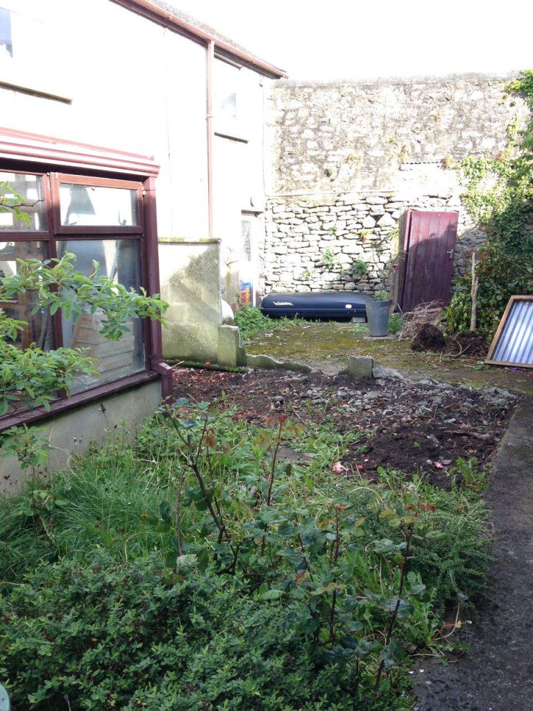 The yard, with potential.
