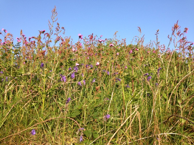 A feast of colour in every hedgerow.