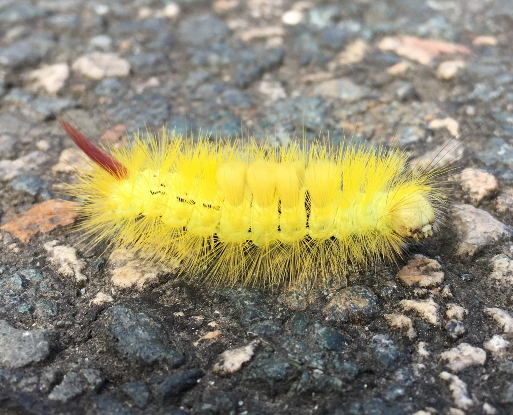 Caterpillar, heavily armed