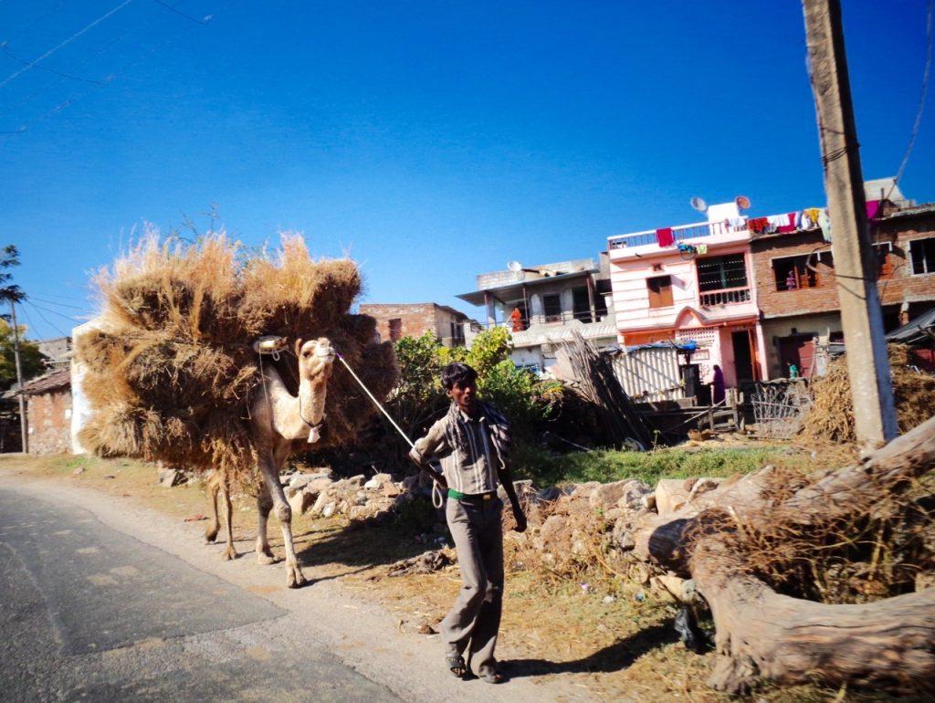 Camel power.