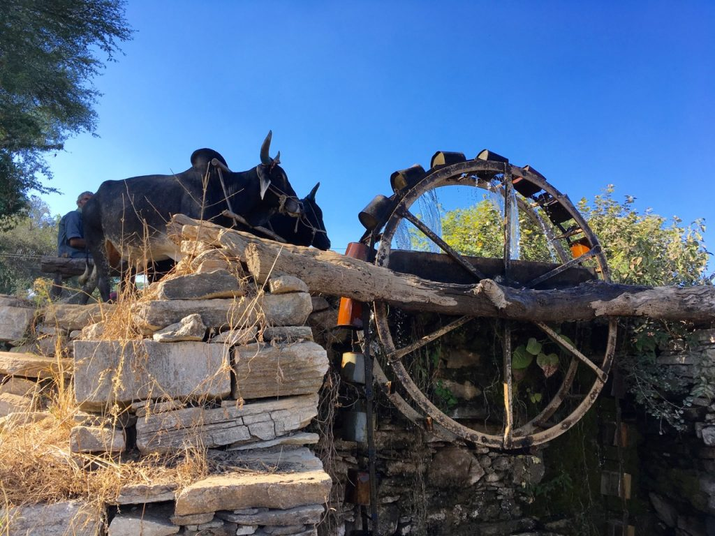 Ox driven pump in the Avelie Hills.
