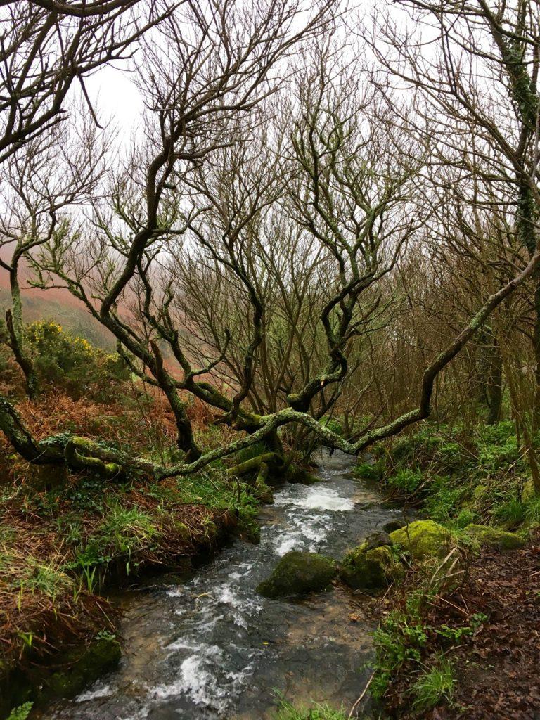 The stream through Cot.