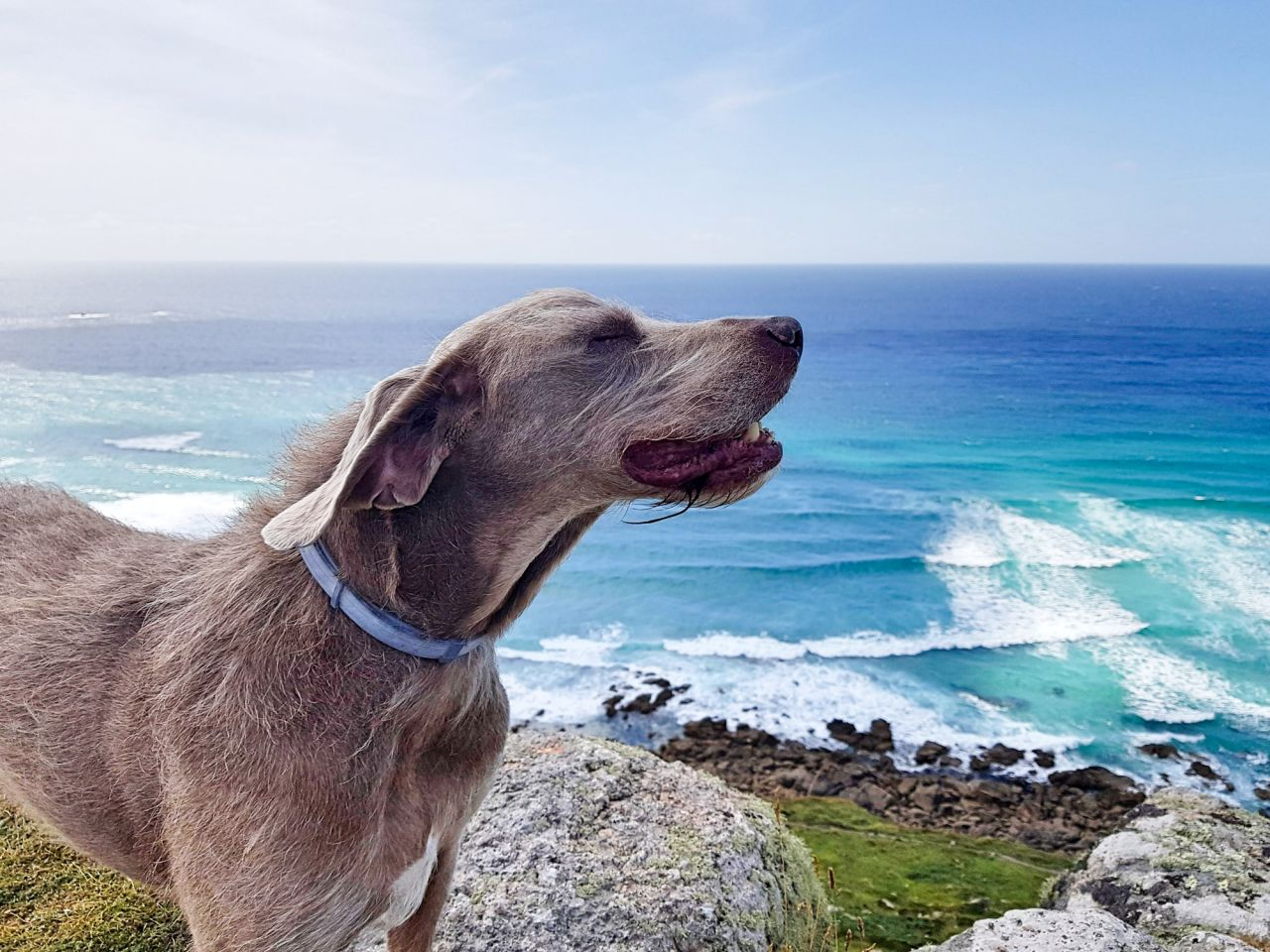 The Cornish Way - Dog Friendly Beaches
