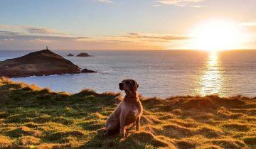 The Cornish Way - Dog Friendly Beaches